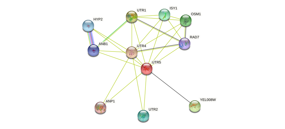 UTR5 protein (Saccharomyces cerevisiae) - STRING interaction network