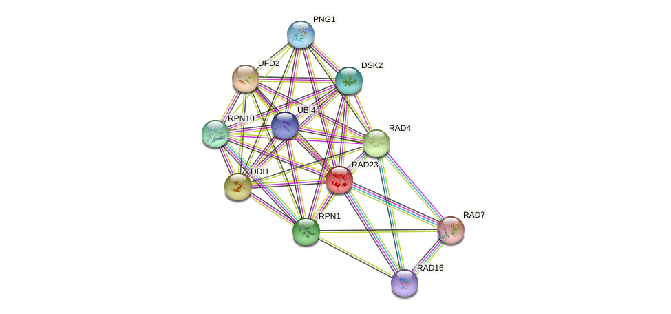 RAD23 protein (Saccharomyces cerevisiae) - STRING interaction network