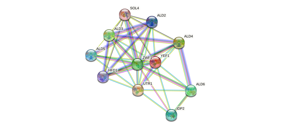 YEF1 protein (Saccharomyces cerevisiae) - STRING interaction network
