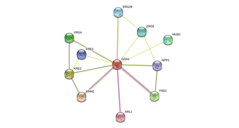 GDA1 protein (Saccharomyces cerevisiae) - STRING interaction network