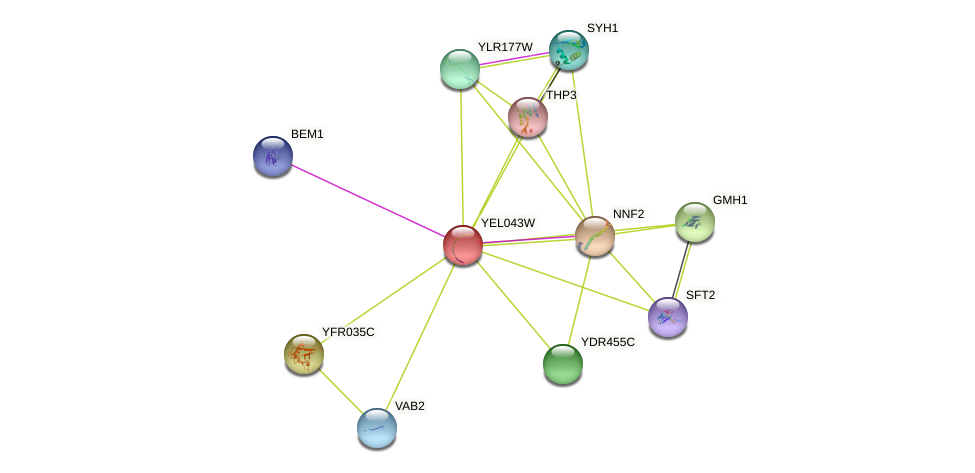 YEL043W protein (Saccharomyces cerevisiae) - STRING interaction network