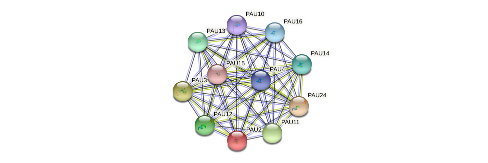 PAU2 protein (Saccharomyces cerevisiae) - STRING interaction network