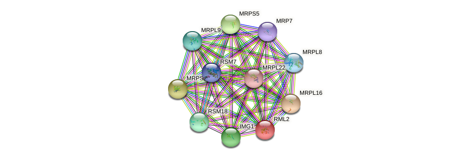 RML2 protein (Saccharomyces cerevisiae) - STRING interaction network