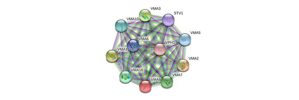 VMA8 protein (Saccharomyces cerevisiae) - STRING interaction network