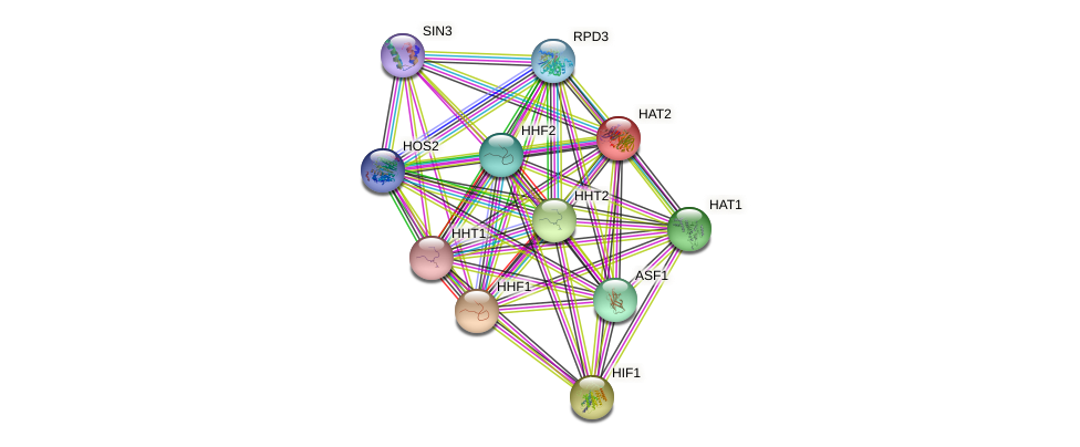 HAT2 protein (Saccharomyces cerevisiae) - STRING interaction network