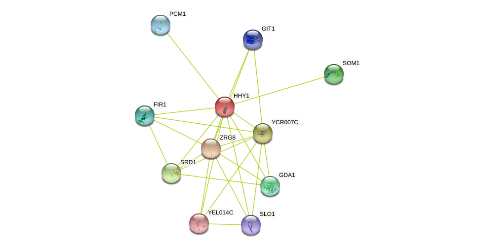 HHY1 protein (Saccharomyces cerevisiae) - STRING interaction network