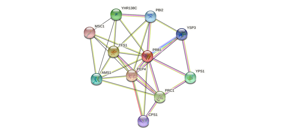 PRB1 protein (Saccharomyces cerevisiae) - STRING interaction network
