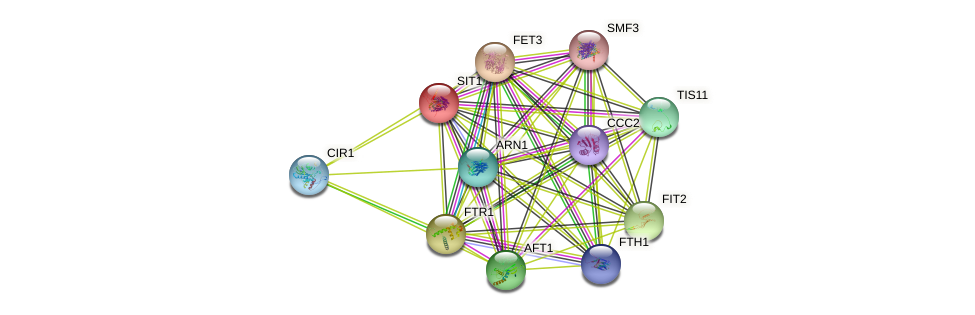 SIT1 protein (Saccharomyces cerevisiae) - STRING interaction network