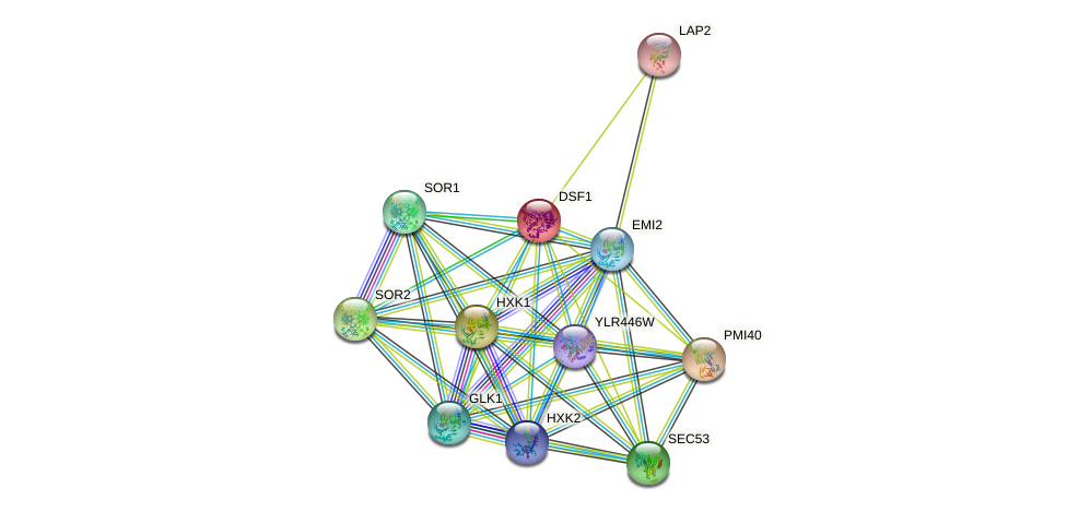 DSF1 protein (Saccharomyces cerevisiae) - STRING interaction network