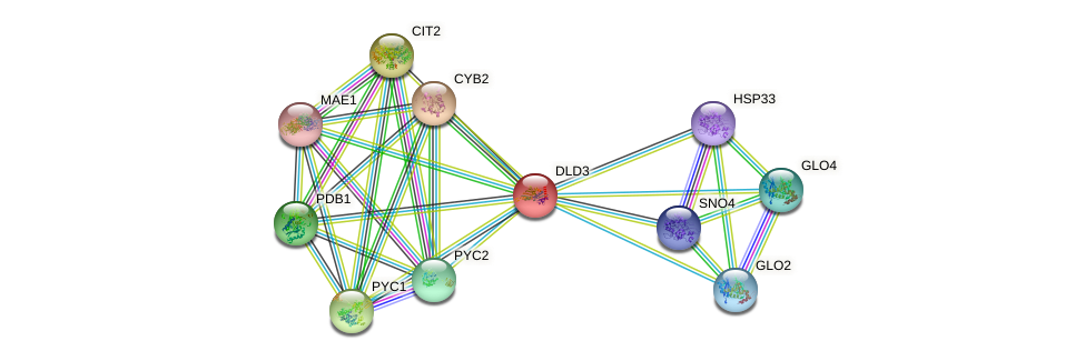 DLD3 protein (Saccharomyces cerevisiae) - STRING interaction network