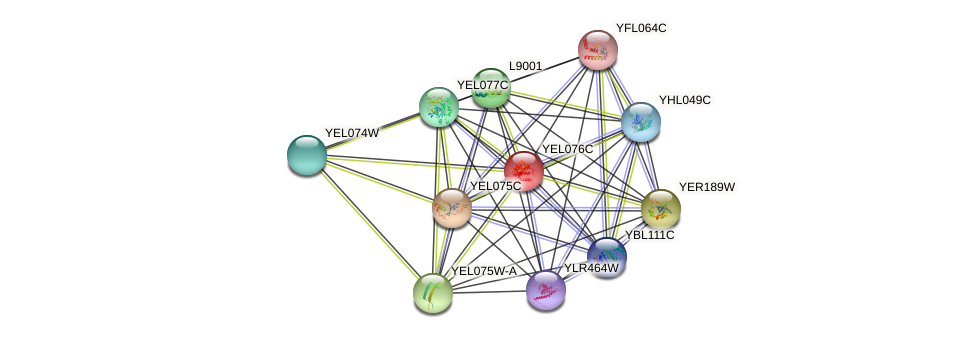 YEL076C protein (Saccharomyces cerevisiae) - STRING interaction network