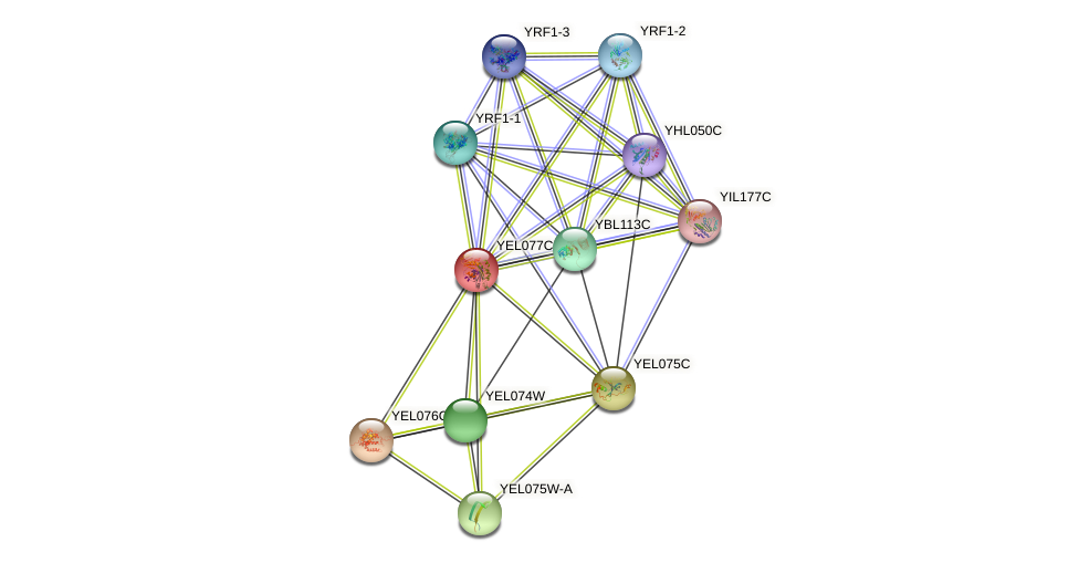 YEL077C protein (Saccharomyces cerevisiae) - STRING interaction network