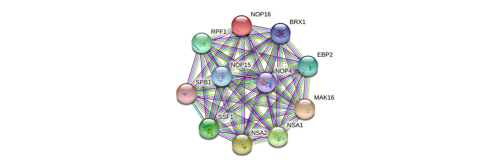 NOP16 protein (Saccharomyces cerevisiae) - STRING interaction network