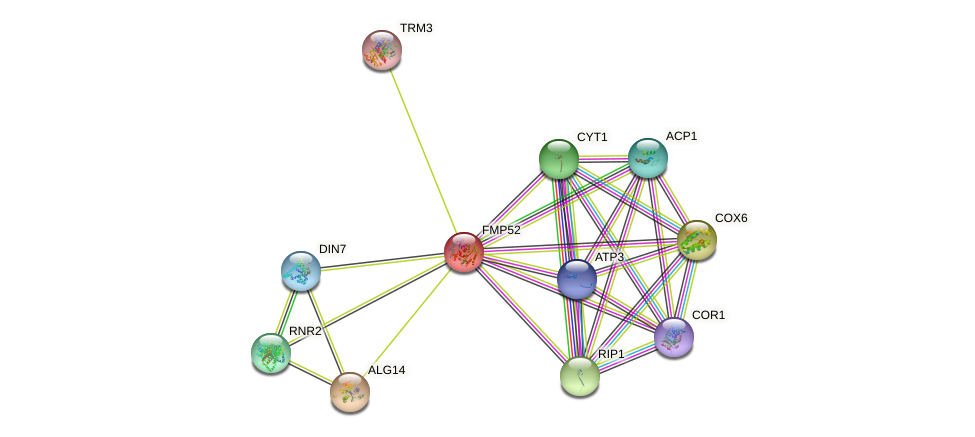 FMP52 protein (Saccharomyces cerevisiae) - STRING interaction network