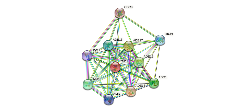 YND1 protein (Saccharomyces cerevisiae) - STRING interaction network