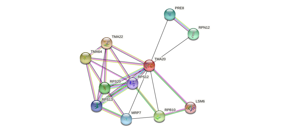 TMA20 protein (Saccharomyces cerevisiae) - STRING interaction network
