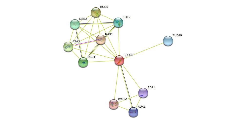 BUD25 protein (Saccharomyces cerevisiae) - STRING interaction network