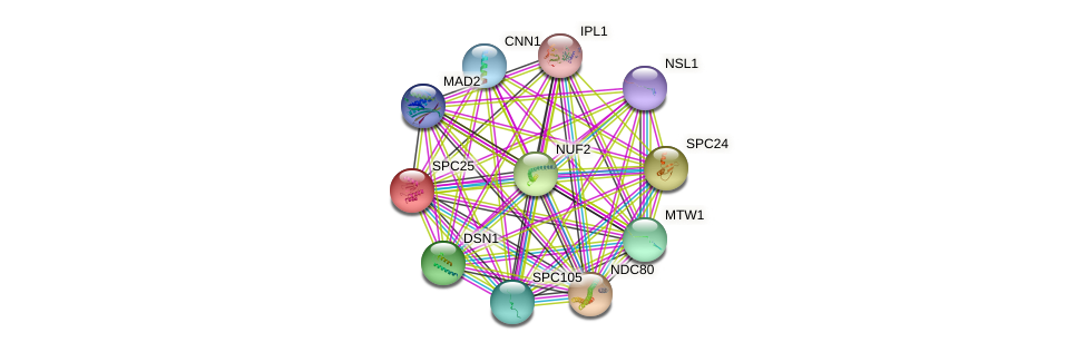 SPC25 protein (Saccharomyces cerevisiae) - STRING interaction network