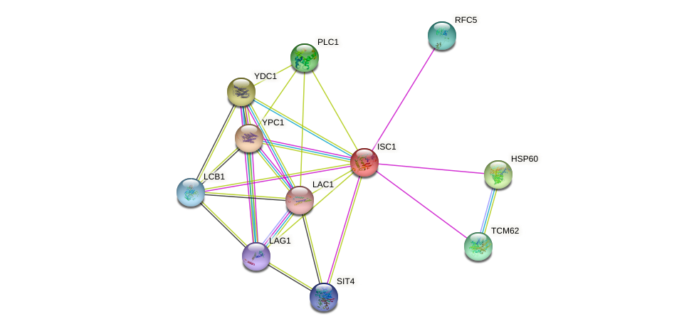 ISC1 protein (Saccharomyces cerevisiae) - STRING interaction network