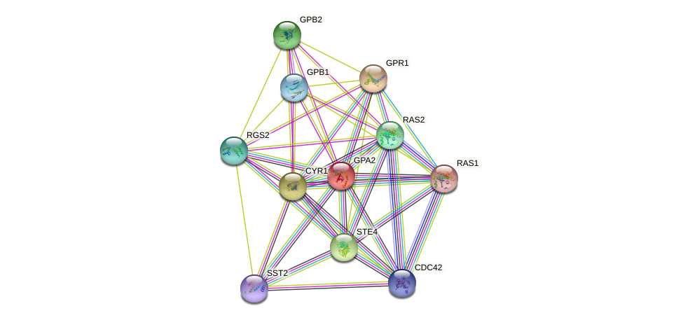 GPA2 protein (Saccharomyces cerevisiae) - STRING interaction network