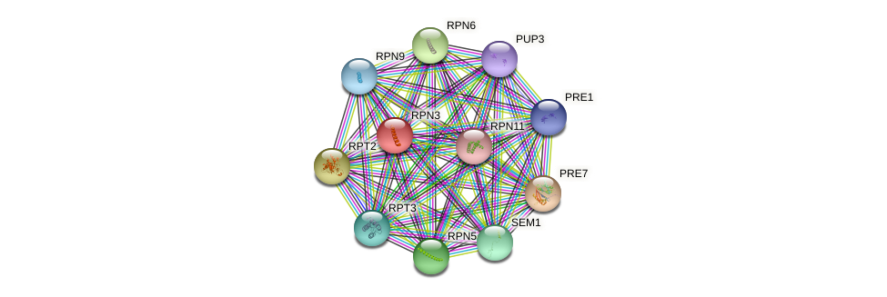 RPN3 protein (Saccharomyces cerevisiae) - STRING interaction network
