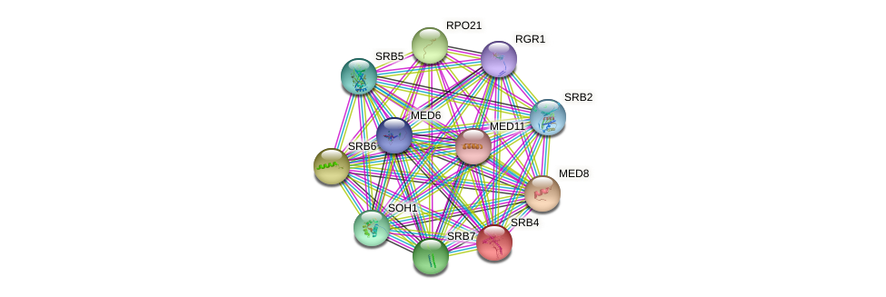 SRB4 protein (Saccharomyces cerevisiae) - STRING interaction network