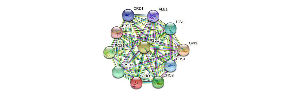CHO1 protein (Saccharomyces cerevisiae) - STRING interaction network