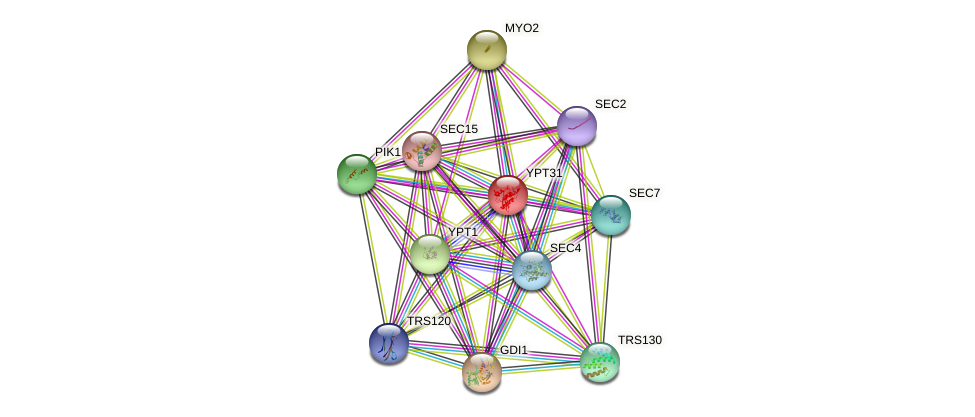 YPT31 protein (Saccharomyces cerevisiae) - STRING interaction network