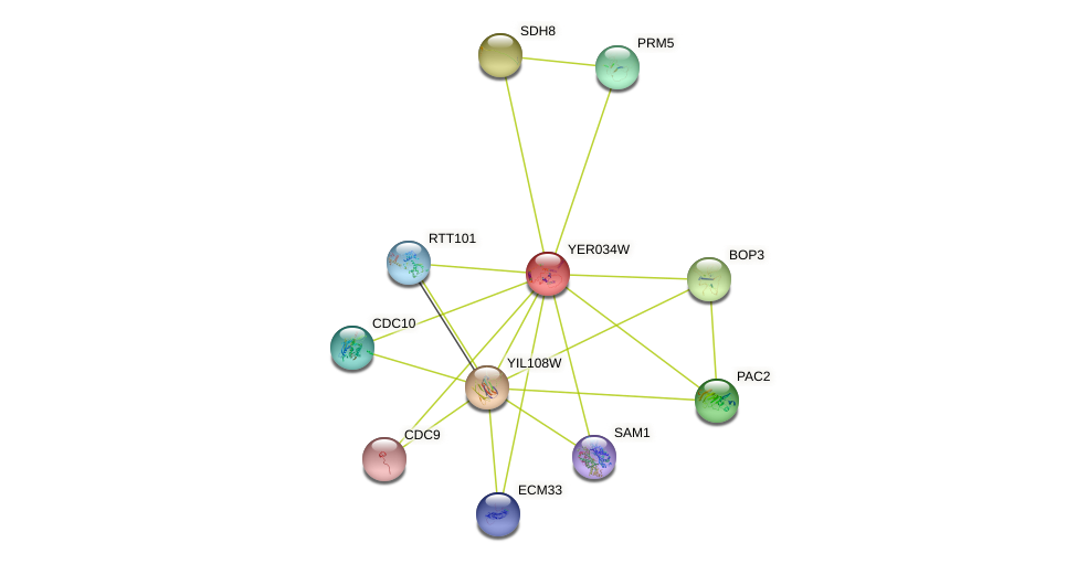 YER034W protein (Saccharomyces cerevisiae) - STRING interaction network