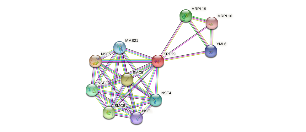 KRE29 protein (Saccharomyces cerevisiae) - STRING interaction network