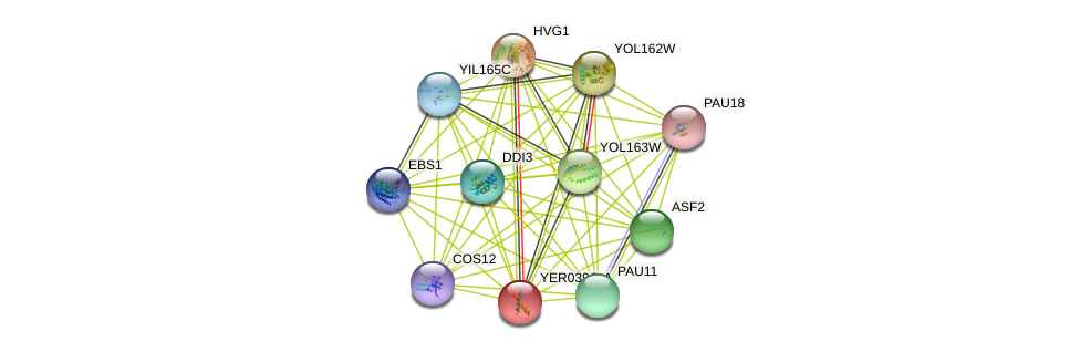 YER039C-A protein (Saccharomyces cerevisiae) - STRING interaction network