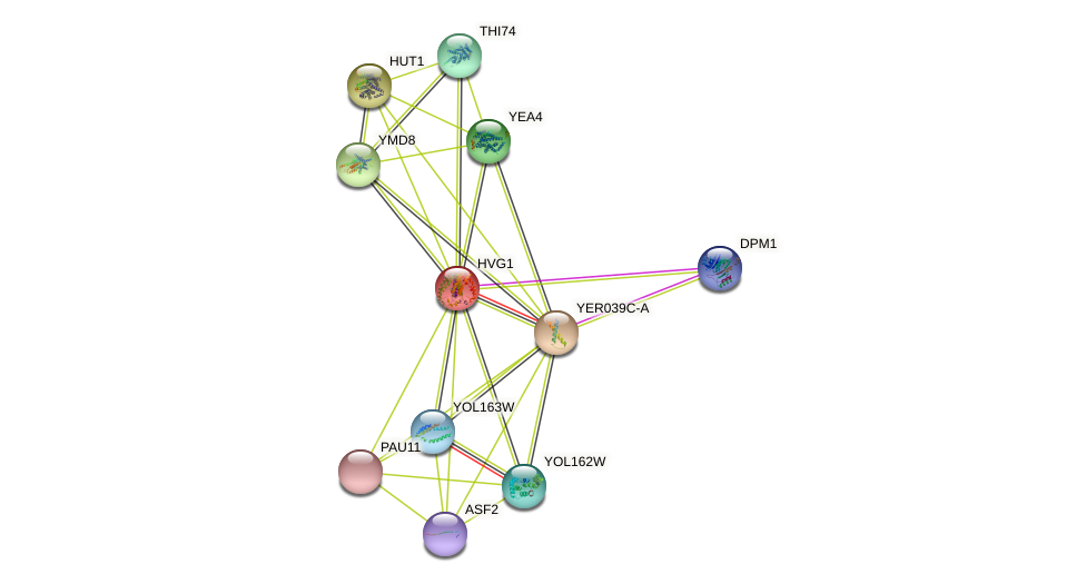 HVG1 protein (Saccharomyces cerevisiae) - STRING interaction network