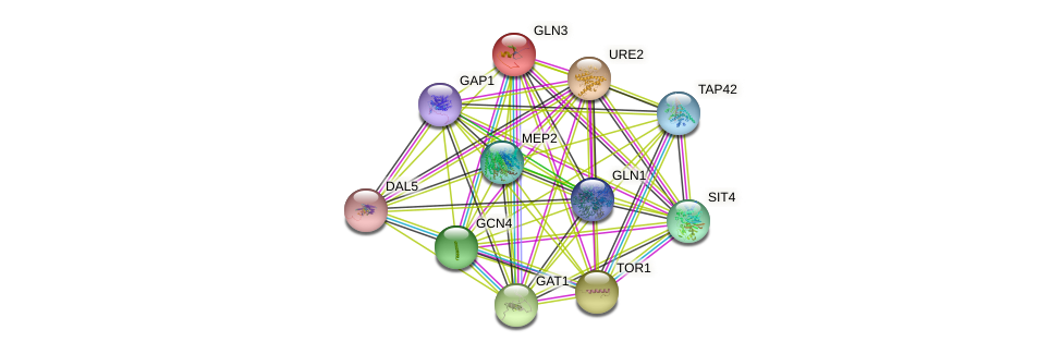 GLN3 protein (Saccharomyces cerevisiae) - STRING interaction network