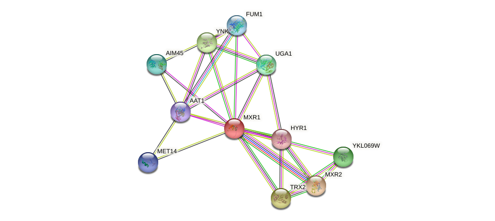 MXR1 protein (Saccharomyces cerevisiae) - STRING interaction network