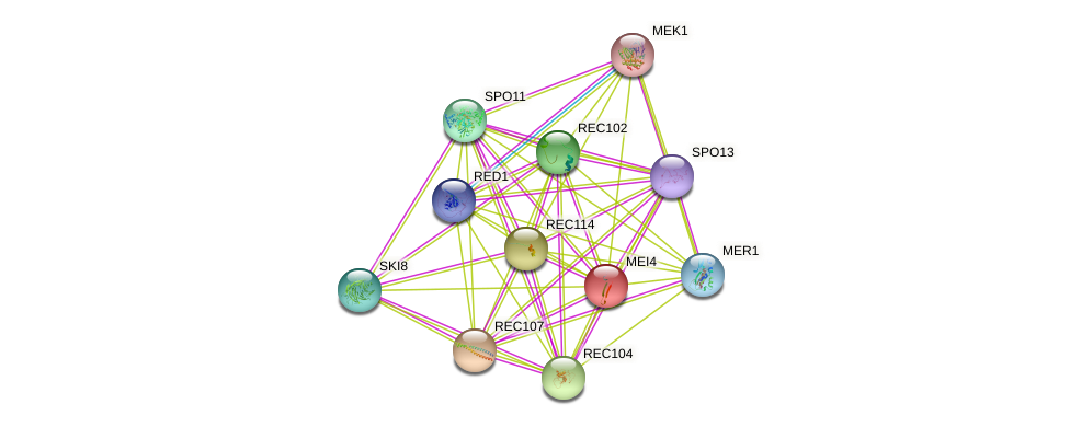 MEI4 protein (Saccharomyces cerevisiae) - STRING interaction network