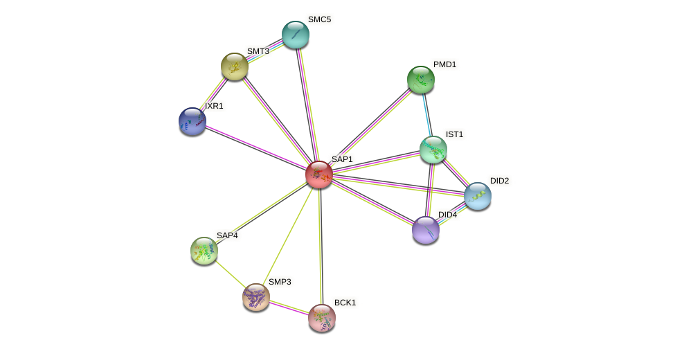 SAP1 protein (Saccharomyces cerevisiae) - STRING interaction network