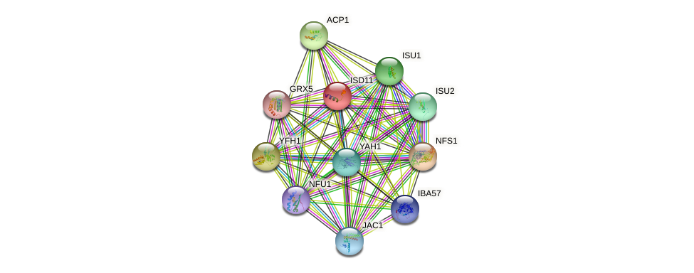 ISD11 protein (Saccharomyces cerevisiae) - STRING interaction network