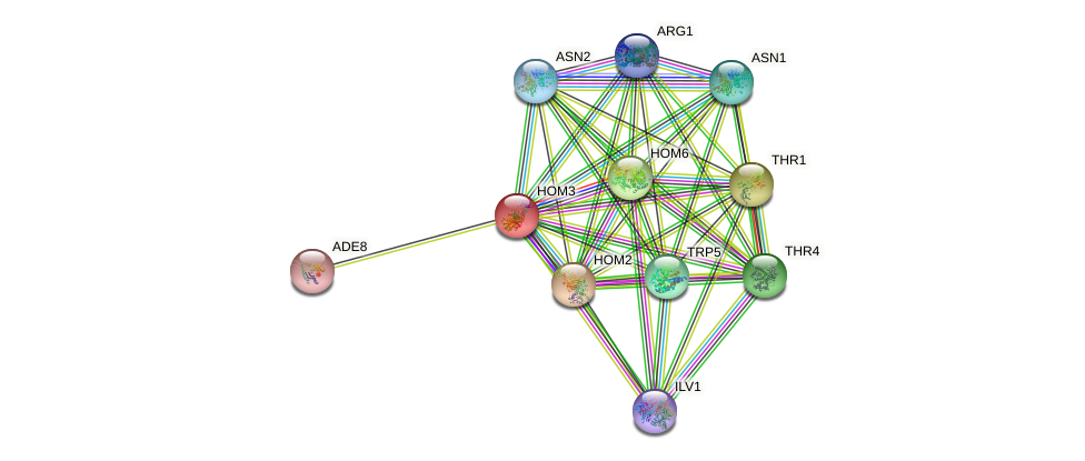 HOM3 protein (Saccharomyces cerevisiae) - STRING interaction network