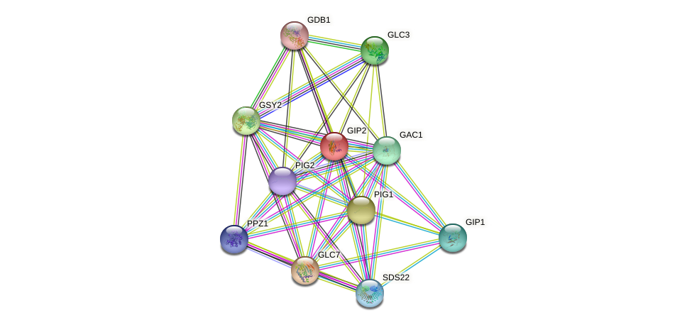 GIP2 protein (Saccharomyces cerevisiae) - STRING interaction network
