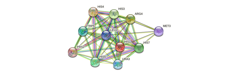 HIS1 protein (Saccharomyces cerevisiae) - STRING interaction network