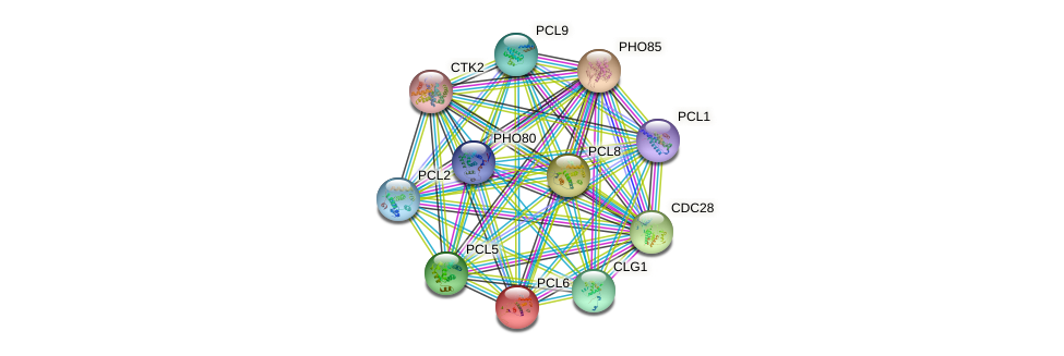 PCL6 protein (Saccharomyces cerevisiae) - STRING interaction network