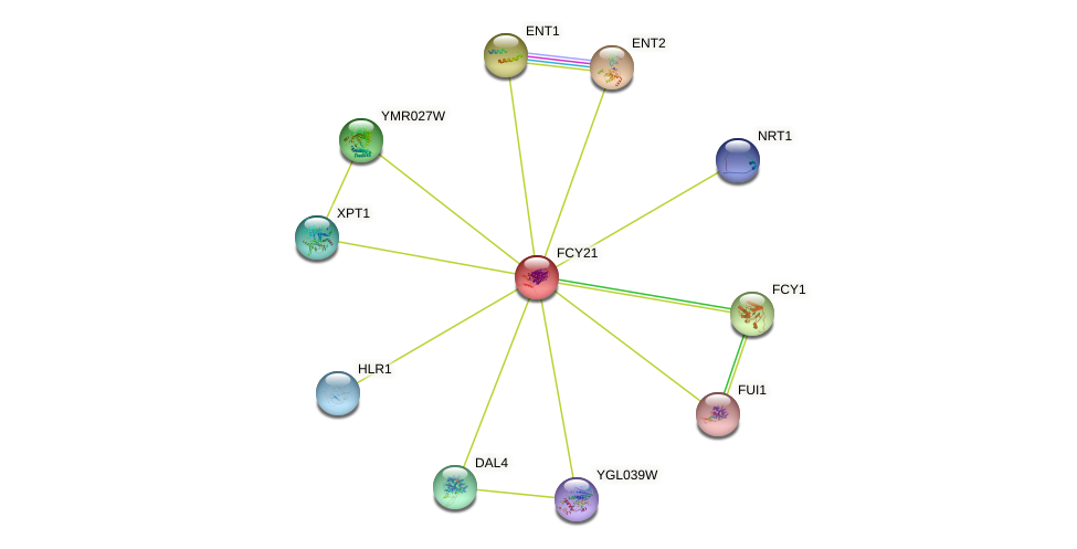 FCY21 protein (Saccharomyces cerevisiae) - STRING interaction network