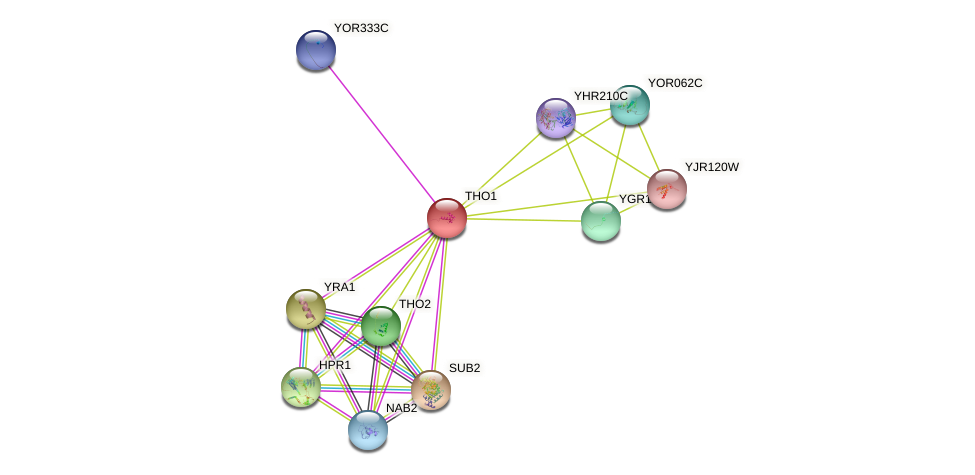 THO1 protein (Saccharomyces cerevisiae) - STRING interaction network