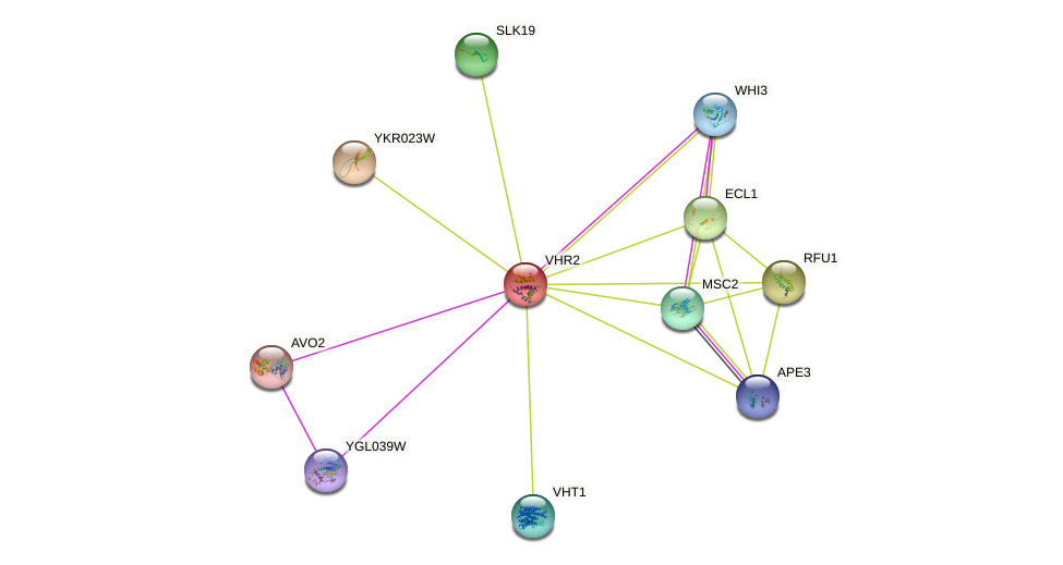 VHR2 protein (Saccharomyces cerevisiae) - STRING interaction network