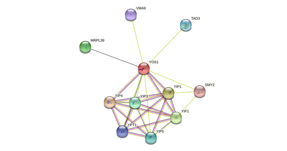 YOS1 protein (Saccharomyces cerevisiae) - STRING interaction network