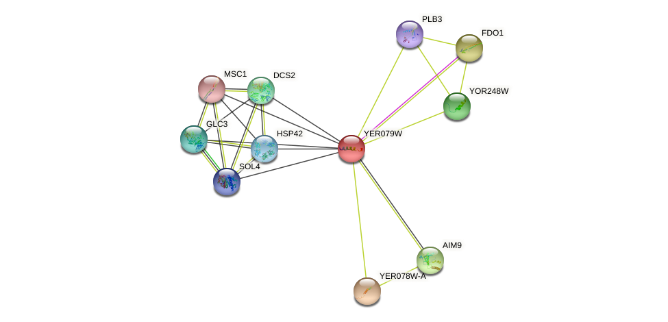 YER079W protein (Saccharomyces cerevisiae) - STRING interaction network