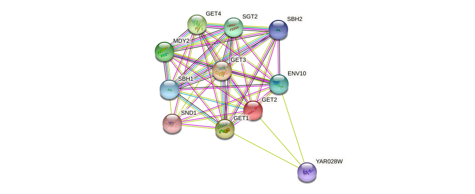 GET2 protein (Saccharomyces cerevisiae) - STRING interaction network