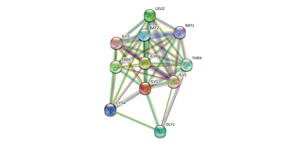 ILV1 protein (Saccharomyces cerevisiae) - STRING interaction network