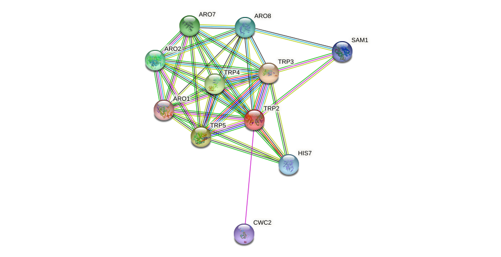 TRP2 protein (Saccharomyces cerevisiae) - STRING interaction network