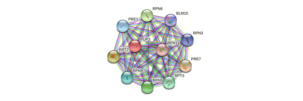 PUP3 protein (Saccharomyces cerevisiae) - STRING interaction network